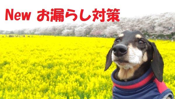 シニア犬の介護-Newお漏らし対策