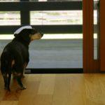 シニア犬の徘徊対策に良い方法を発見!