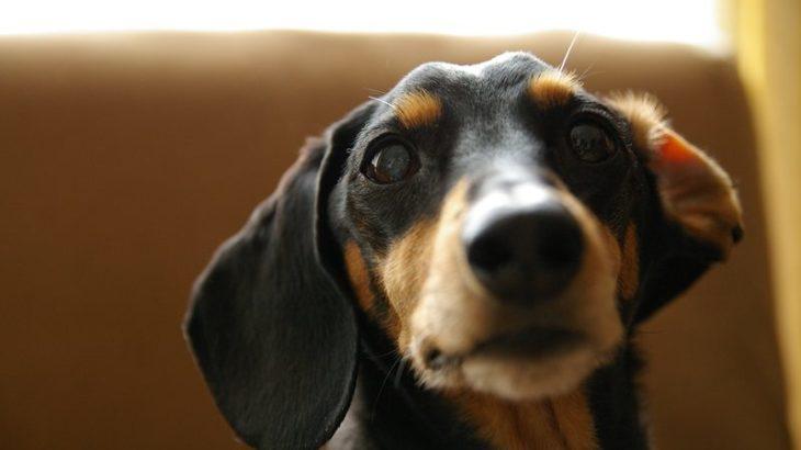 愛犬紋次郎